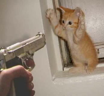 kitten-and-gun.jpg